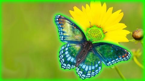 Living beyond Anger - Transcending Perceptions A6.4